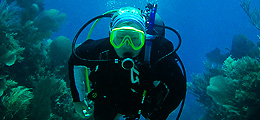 Tubbataha Reef Diving